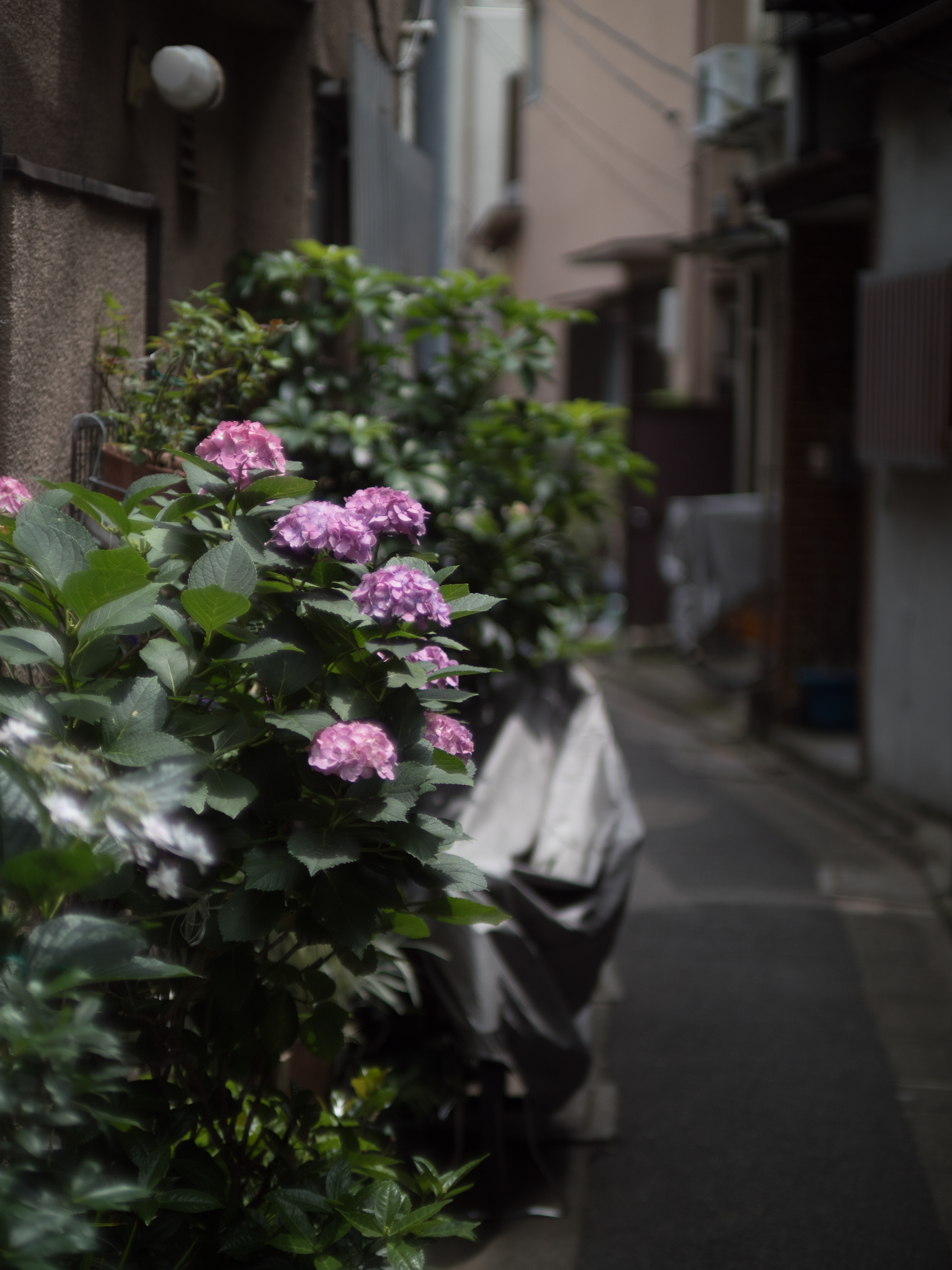 PEN-F / FD 55mm F1.2 S.S.C. / Lens Turbo II / 1/8,000秒 / F1.2 / -1.3EV / ISO200 / WB:オート
