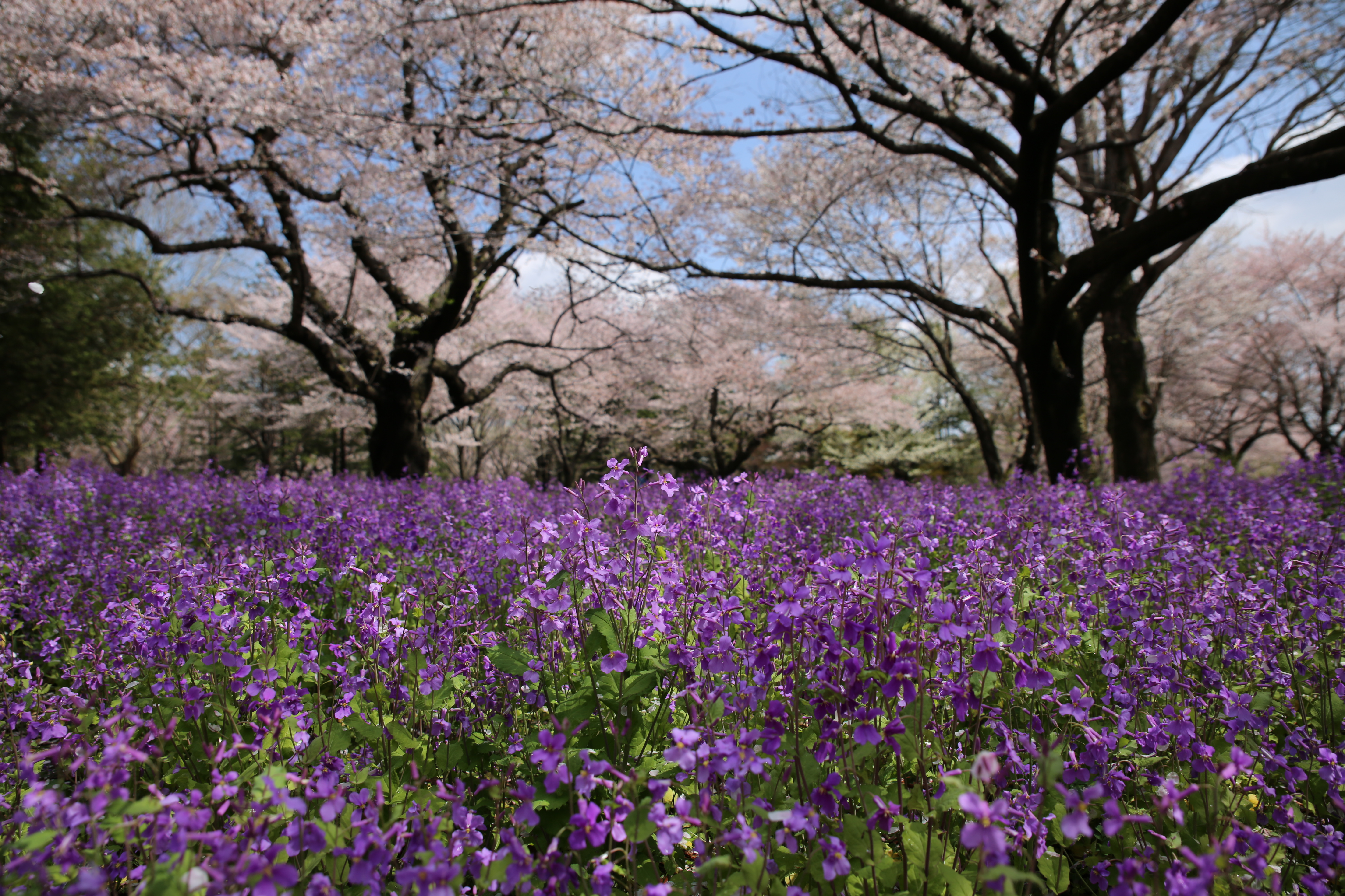 <b>EOS 5D Mark III / SP 24-70mm F2.8 Di VC USD / 約8MB / 5,760×3,840 / 1/800秒 / F4.5 / -0.3EV / ISO100 / 絞り優先AE / WB:オート / 24mm</b>